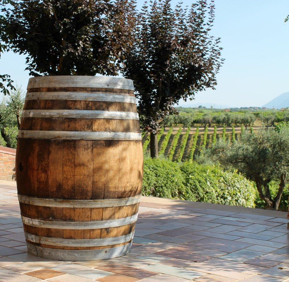 winemaking- oenology -