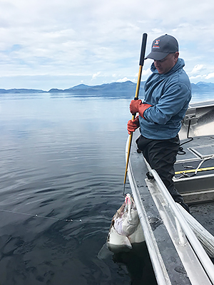 self-guided-angler-landing-halibut-in-alaska.jpg