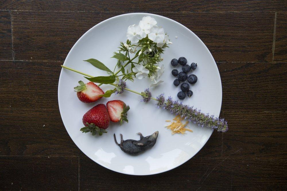 dinnerseries9-16-3.jpg