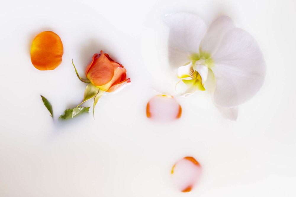 milk & orchid