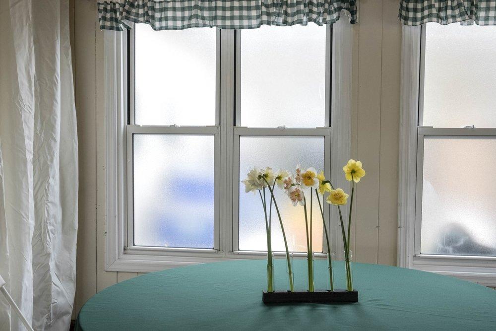 shelter island daffodils