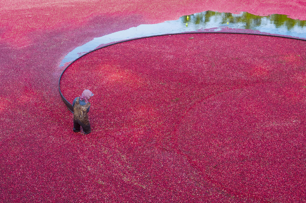 cranberry bogs forever