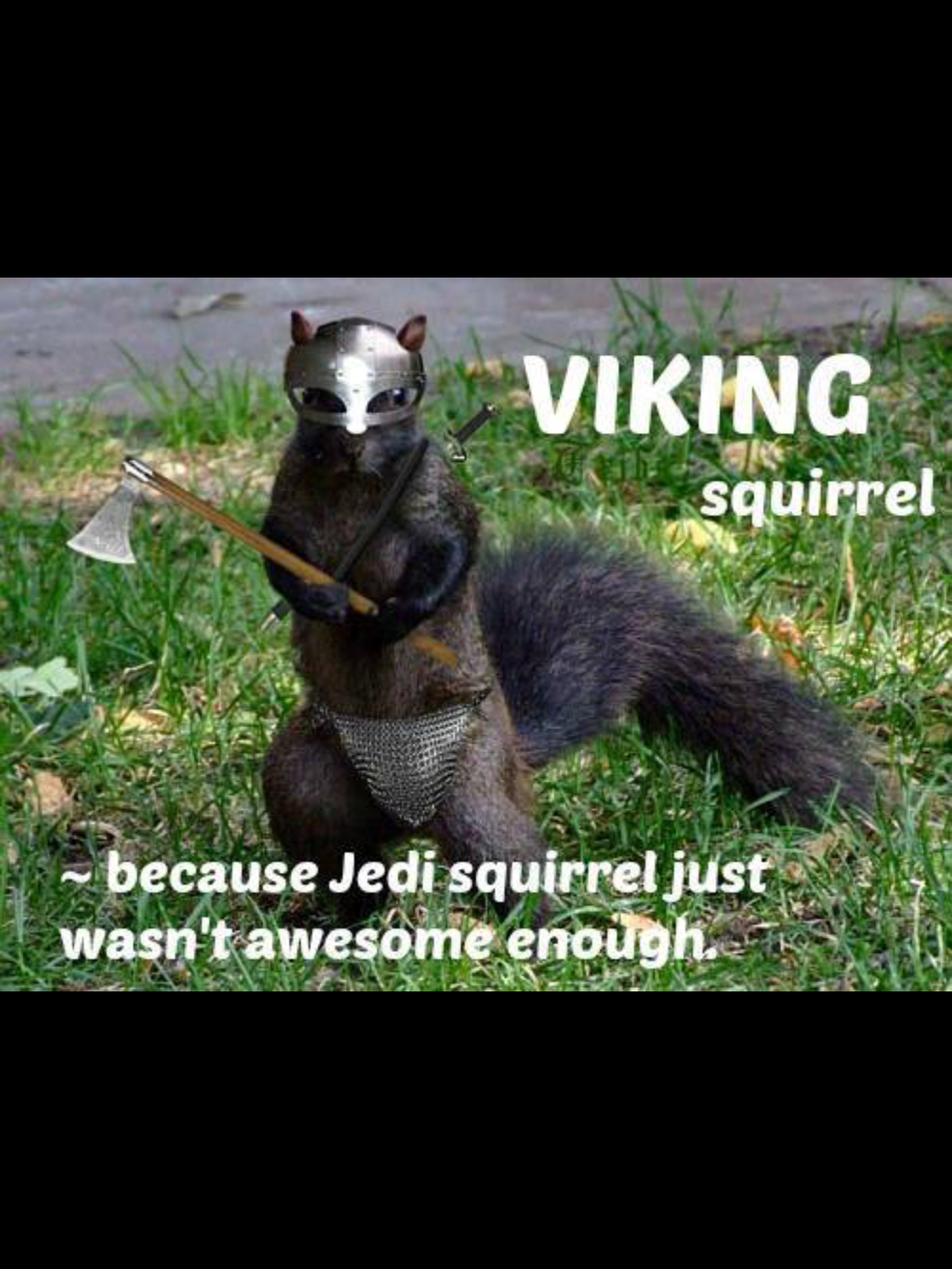 One would not want a viking squirrel as a nemesis. That could get ugly fast.
