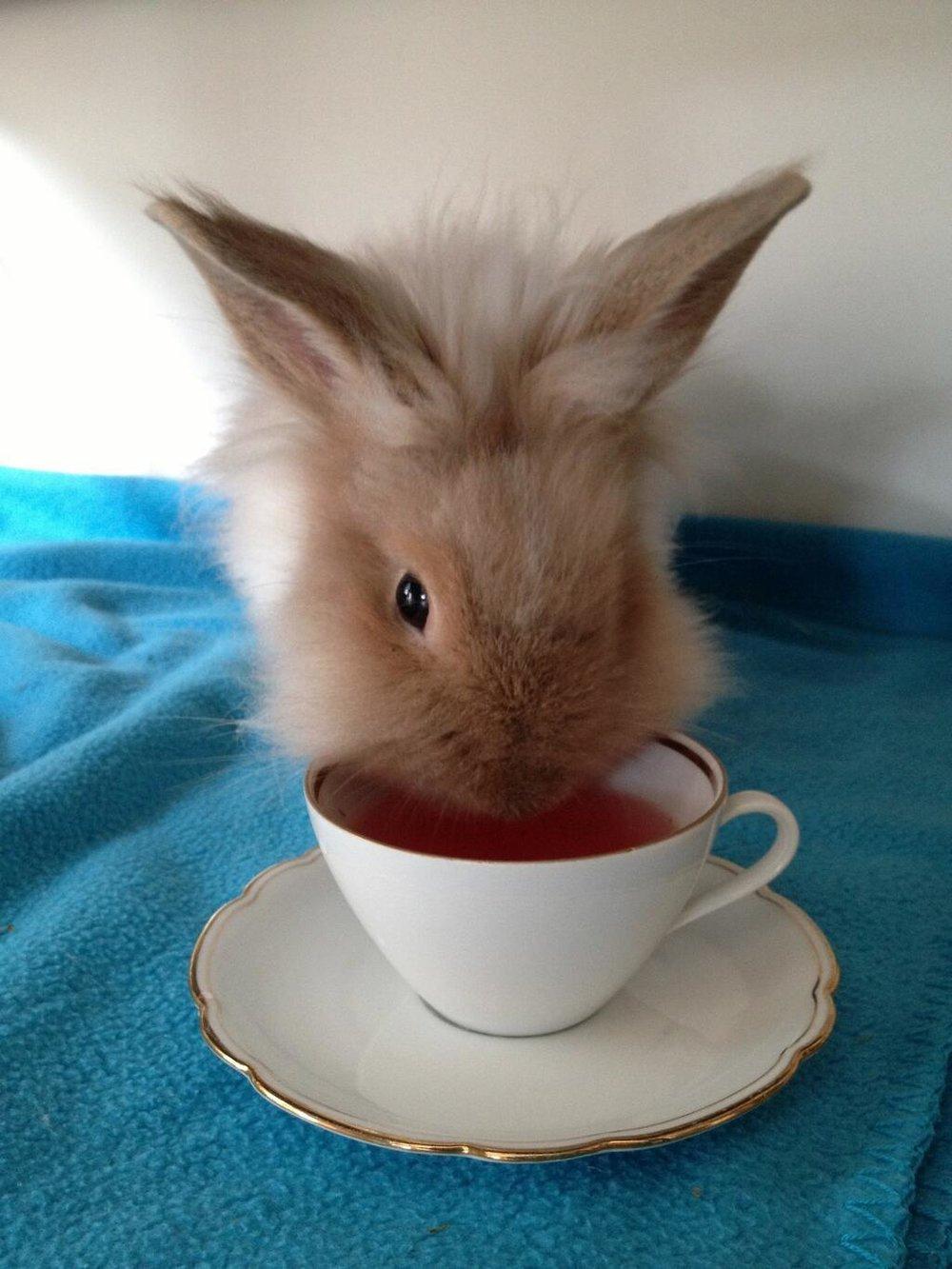 Who doesnt lobe a bunny?