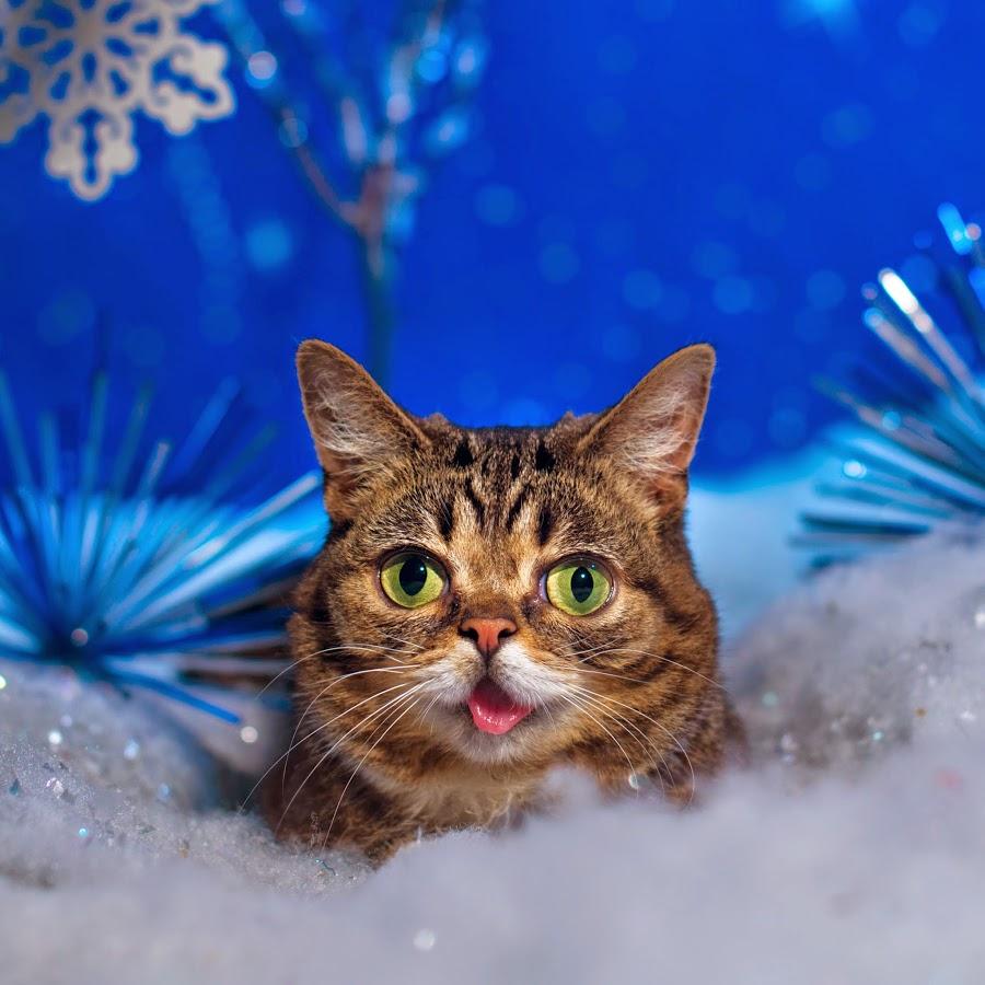 Cute, cat, cancelled.