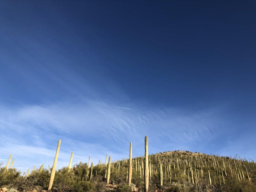 Tucson 2019 -