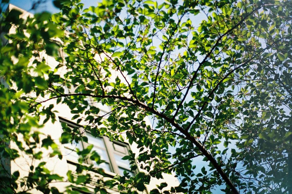 NY_Tree.jpg