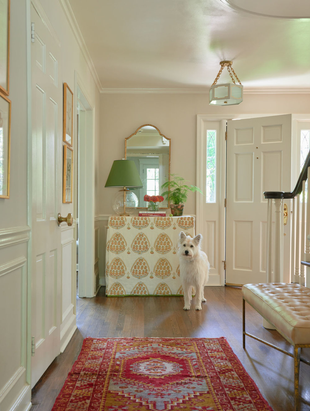 entry-dog.jpg