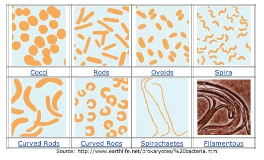 Appearance of Bacteria