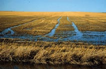 "Agricultural fields provide the drainage basins for on-farm uses of water. This water is typically in contact with organic nutrient rich soils providing ample ""food"" for plants and algae when it goes into a water body."