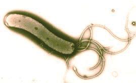 Helicobacter pylori 2
