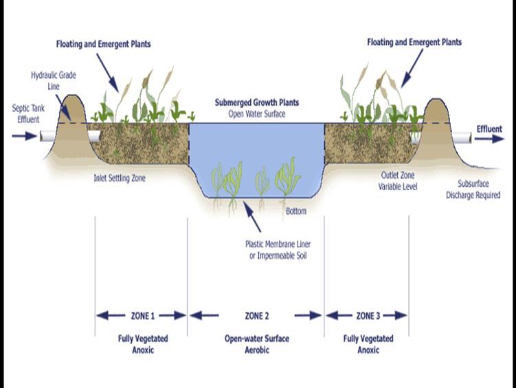 Cattails Removal Naturally