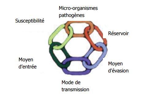 chaîne microbe