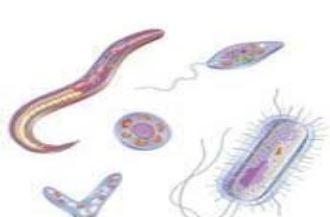 parasites protozoaire