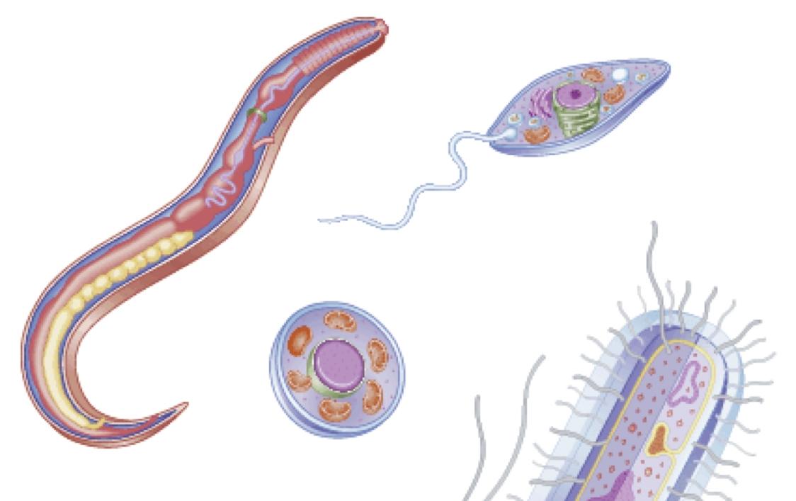 Parasitic Protozoa