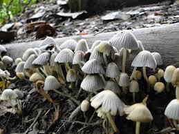 https://pixabay.com/photos/fungi-nature-forest-mushrooms-2358665/
