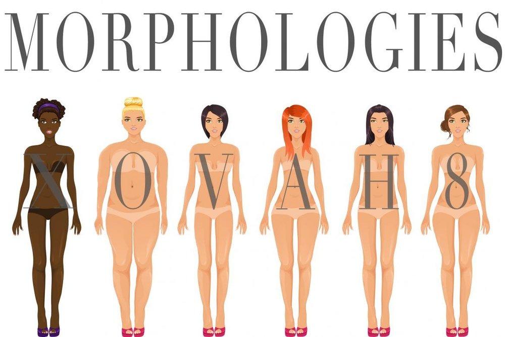 morphomogies.jpg