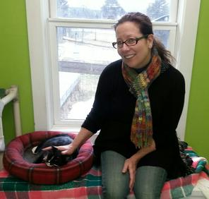 A sleepy kitty at The Central Vermont Humane Society.