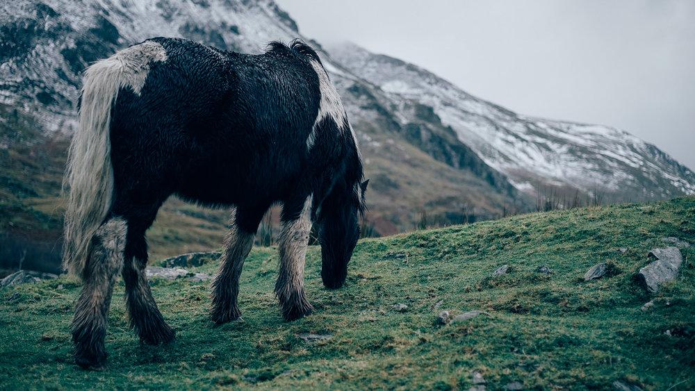 Wild Horses Snowdonia | Zeiss Lenspire
