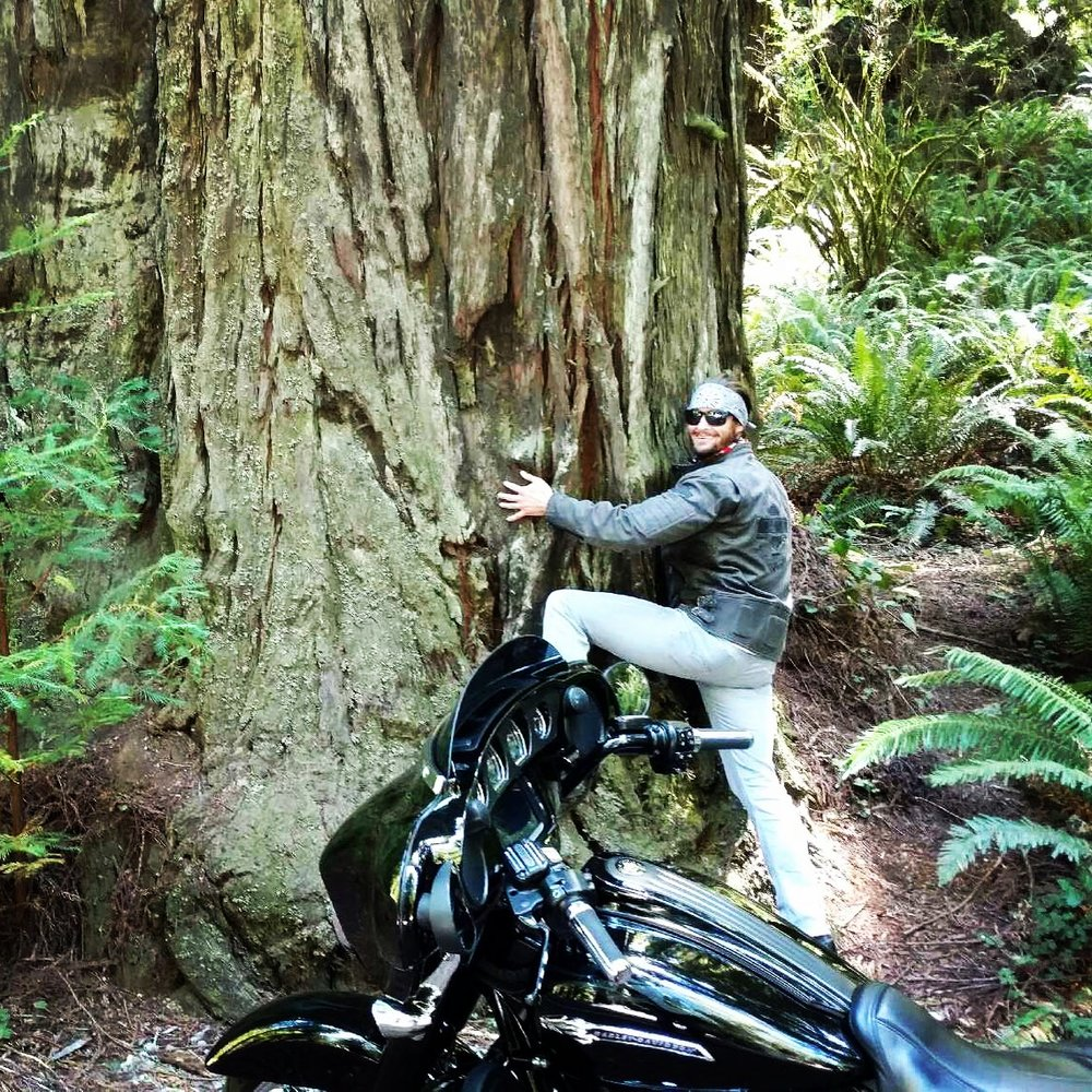 REDWOOD FOREST RIDE