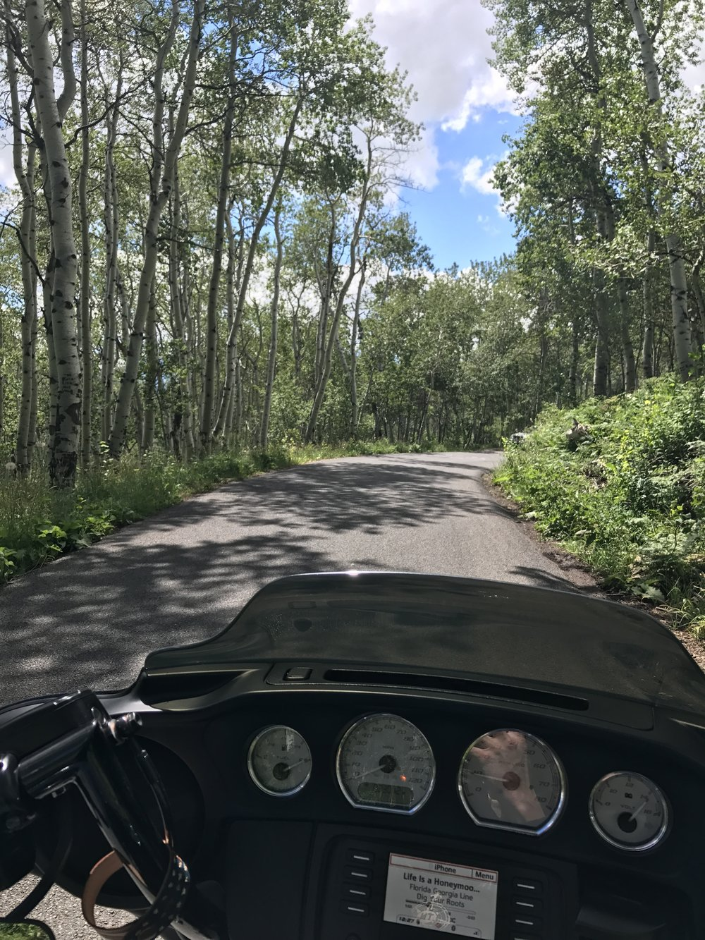 aspen groves.JPG