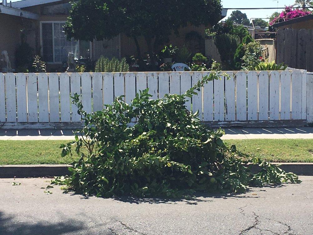 yard waste, E. San Jose