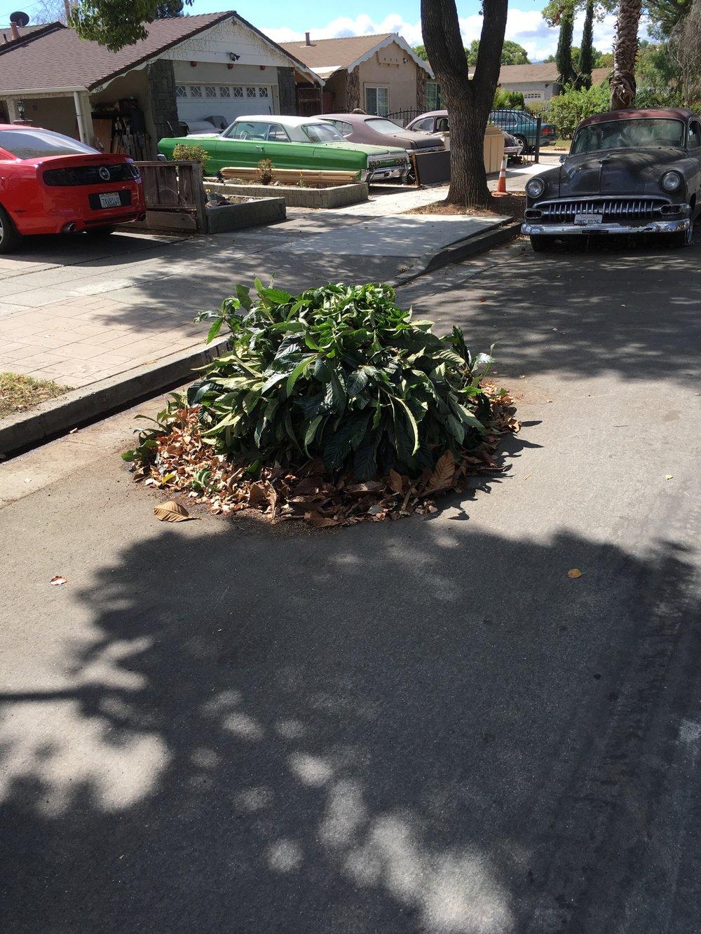 yard waste, Fairgrounds neighborhood