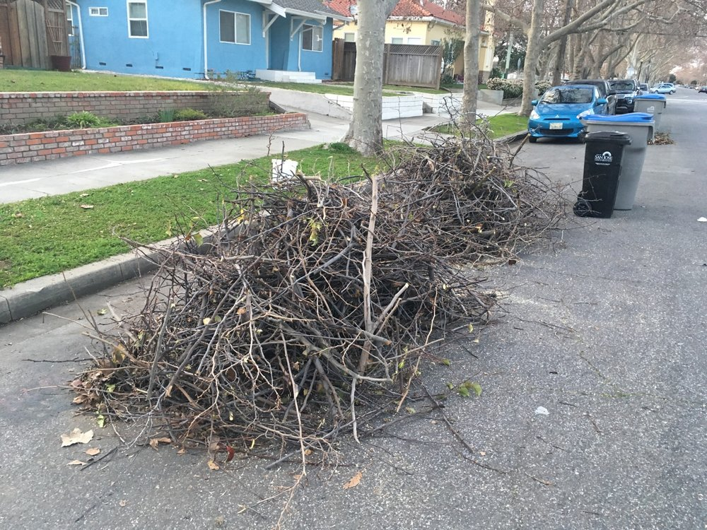 yard waste, Downtown neighborhood