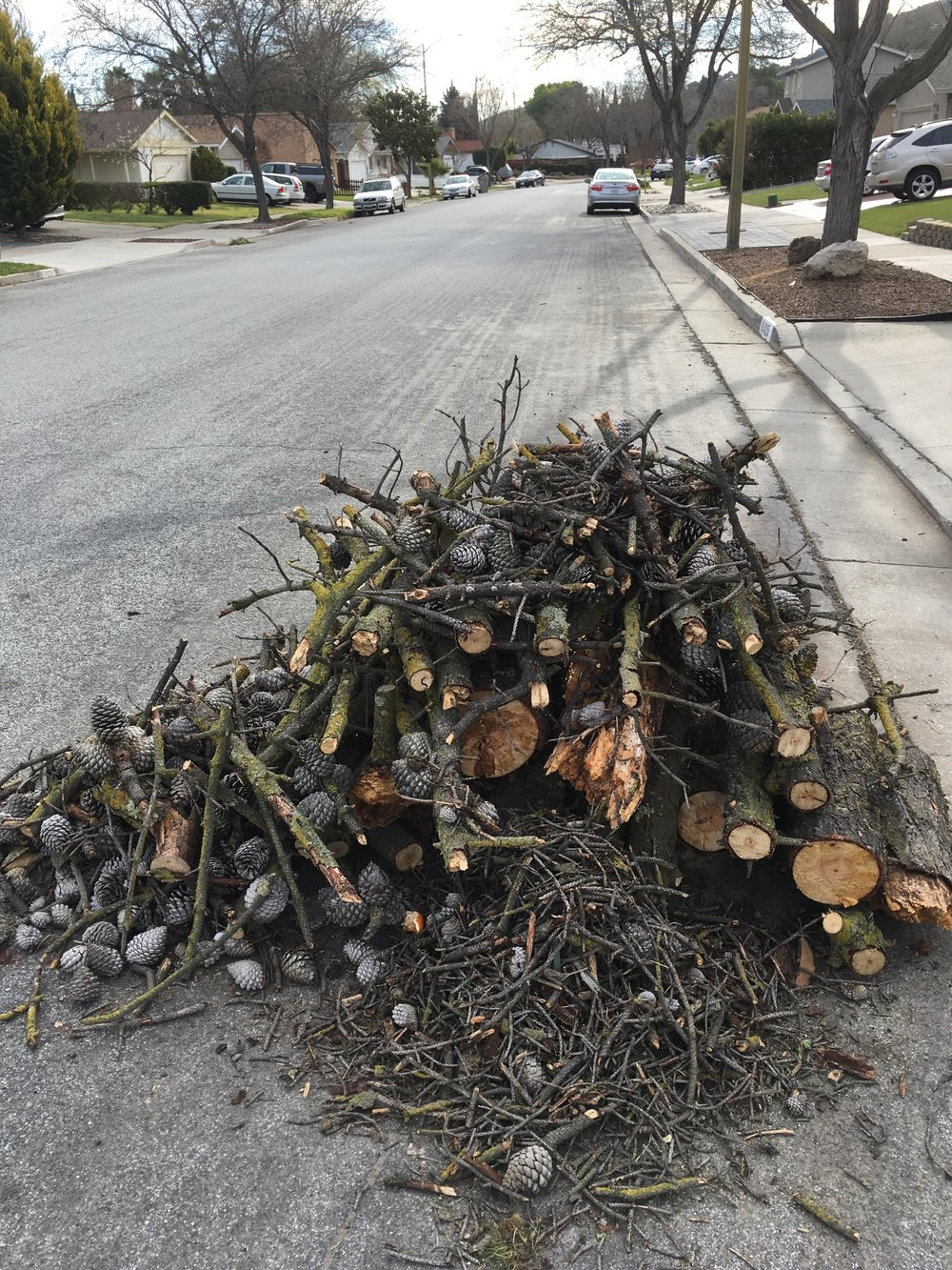 yard waste, Santa Teresa neighborhood