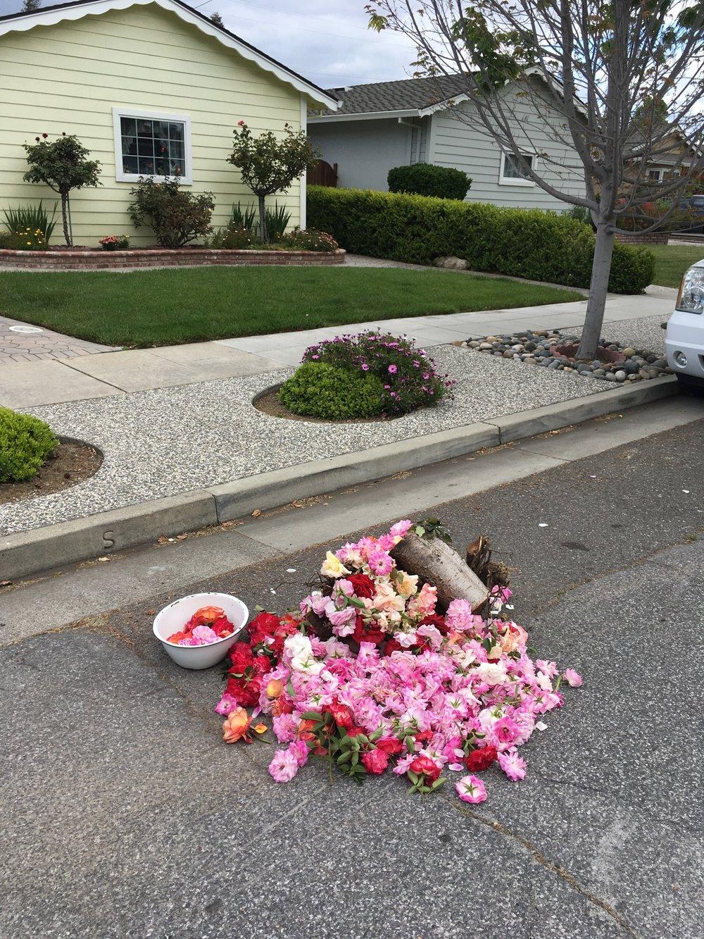 yard waste pile W. San Jose