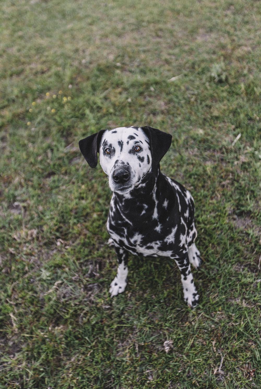Divina, Dalmatian Princess