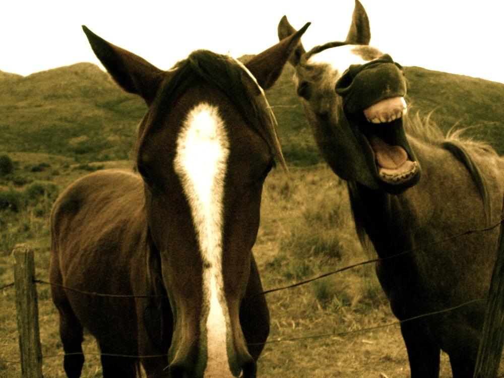 caballos con sonrisa