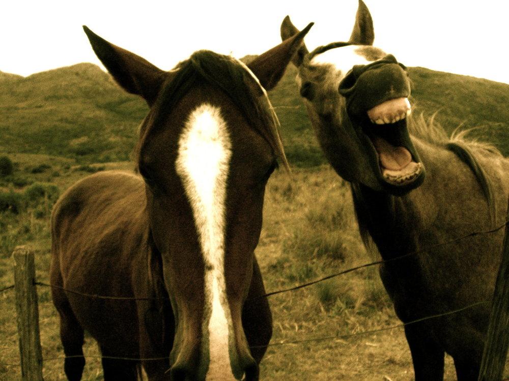 caballos+con+sonrisa.jpg