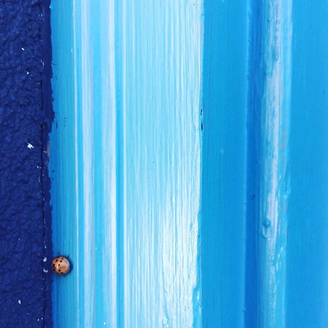 Do the ladybug! [ok, we made that up, but it should be a pose, right?!] But for real. Today's THE LAST DAY of yoga @ ReCreative. Like. Ever. We've 💙💙💙'd having @hermyaknee grace the space every week - join her for one more class! 7pm. $12. All levels welcome. recreativespaces.com/calendar for more. . . . #recreativespaces #yoga #finalclass #findyourinnerpeace #yogi #namaste #yogastudio