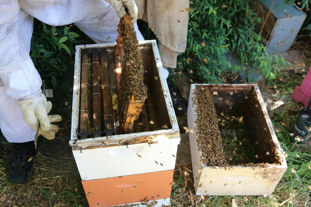 backyard beekeeping canberra environment centre rh canberraenvironment org how to get rid of a beehive in your backyard how to get bees in your yard