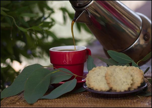 coffee-and-wattlebikkies.png