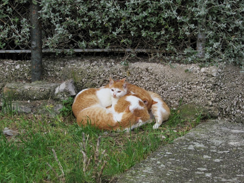 It seemed like we saw cats in Croatia more often than anywhere else we went. This picture is of a strange cat nap-pile I stumbled upon. I counted five but there could have been more? And they're all the same type of cat?