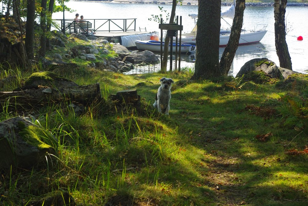 A scene from Southern Sweden: our host family's dog greeting us near the Baltic shoreline.