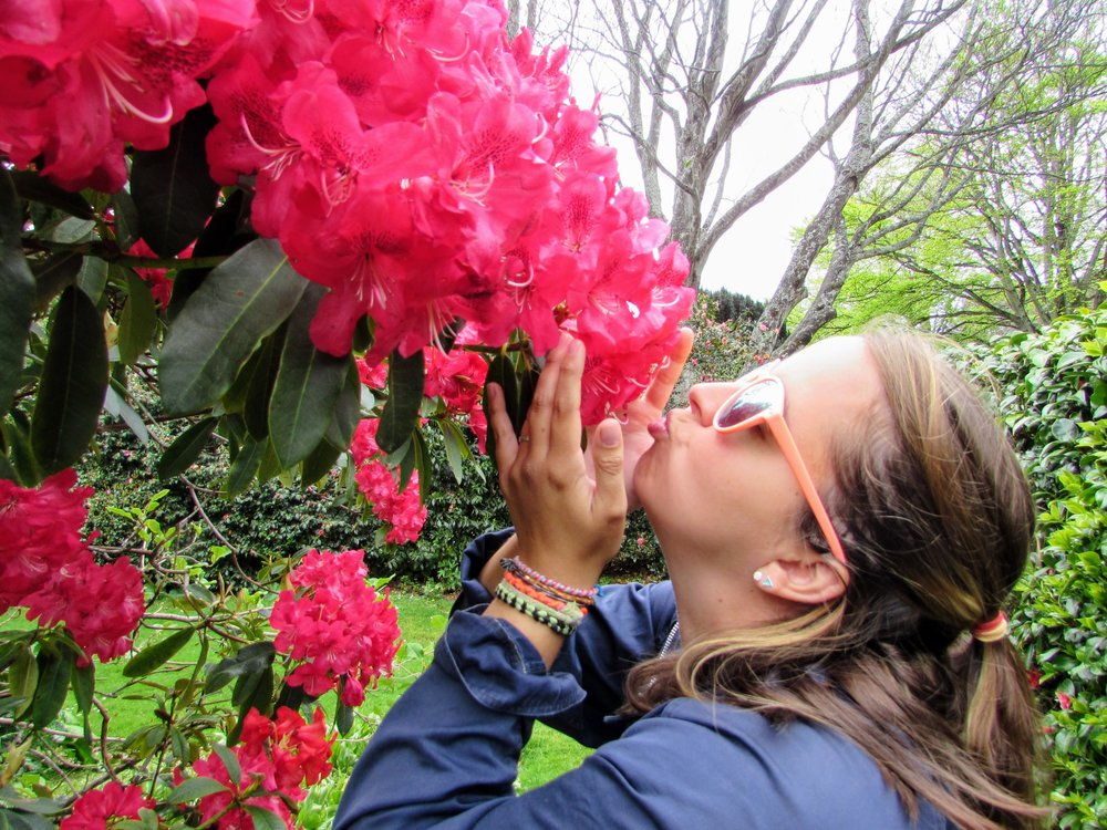 In love with rhodendrons, South Island, New Zealand