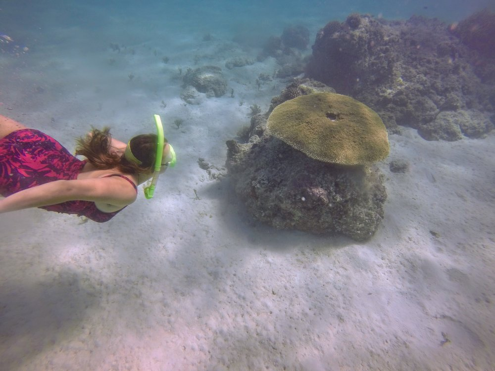 I was pretty glad to have my mask and snorkel with me when we stayed on Pele Island.