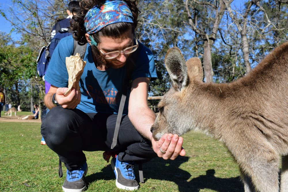 Emmett getting to know one of the many friendly and hungry kangaroos at Lone Pine.