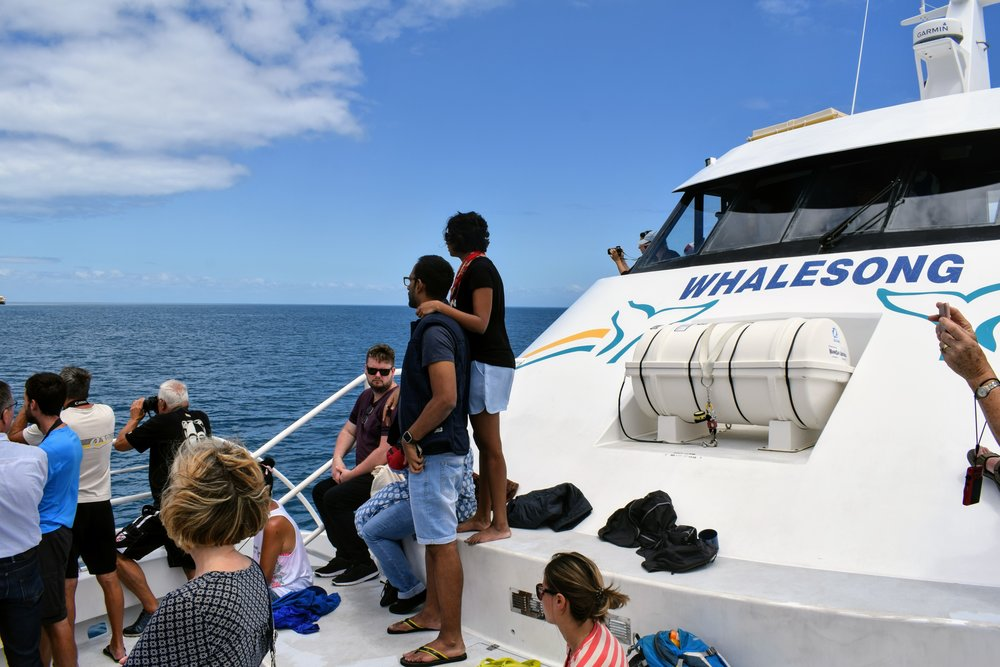 Our tour group scans the horizon for more whales.