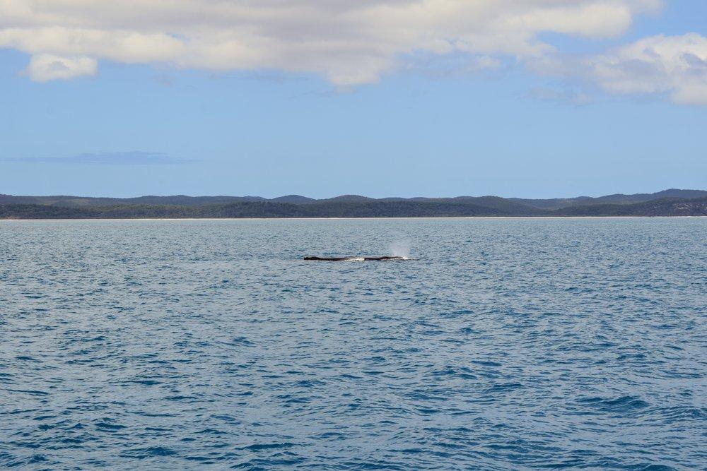 Whale farewell.