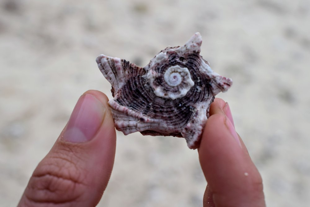 seashells vanuatu
