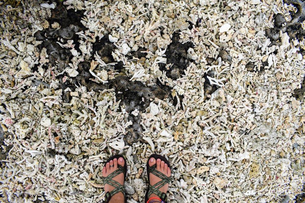 July 5, Epule coral rubble.