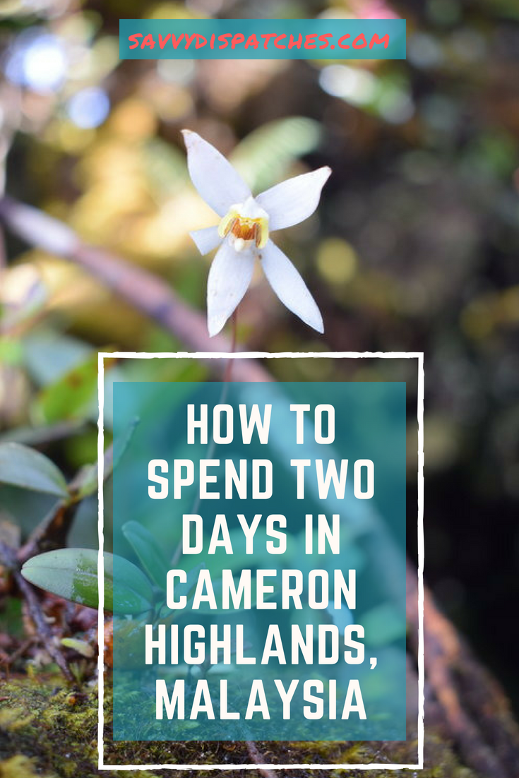 How to Spend Two Days in Cameron Highlands, Malaysia