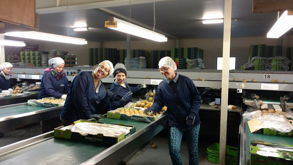 Me, Aleks, & Julia packing kiwi on one of the last days of work.