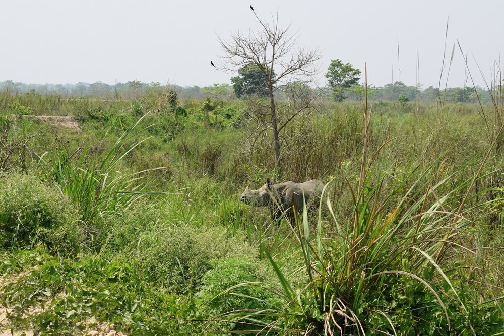 walking safari chitwan national park three
