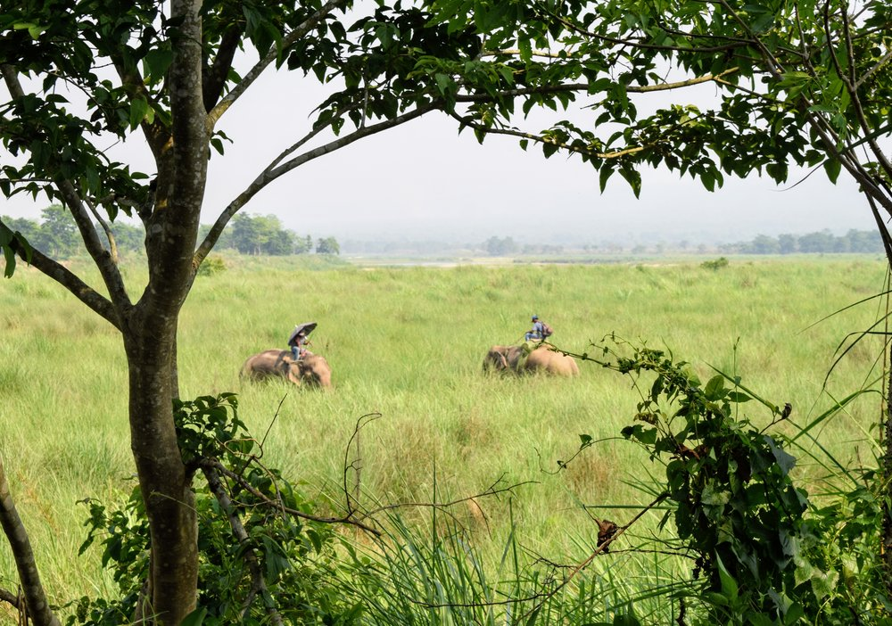 government elephants in chitwan national park nepal