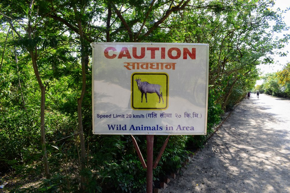 cautionary sign warns against the presence of wild nilgai aka asian antelope